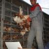 Kale'de Çiftçilere Tavuk Dağıtıldı