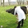 İlçemizde hayvan üreticileri bilgilendirildi