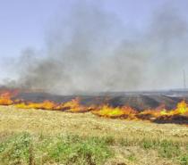 Kale ilçesinde çıkan yangında 24 dönüm kayısı bahçesi yandı
